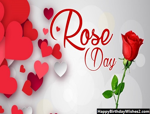 yellow rose day images